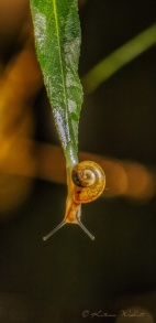 Snail heading down off tip
