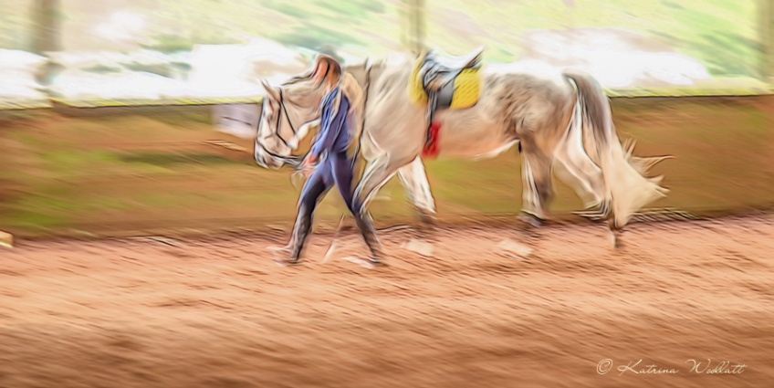creative blur: grey horse walking with handler
